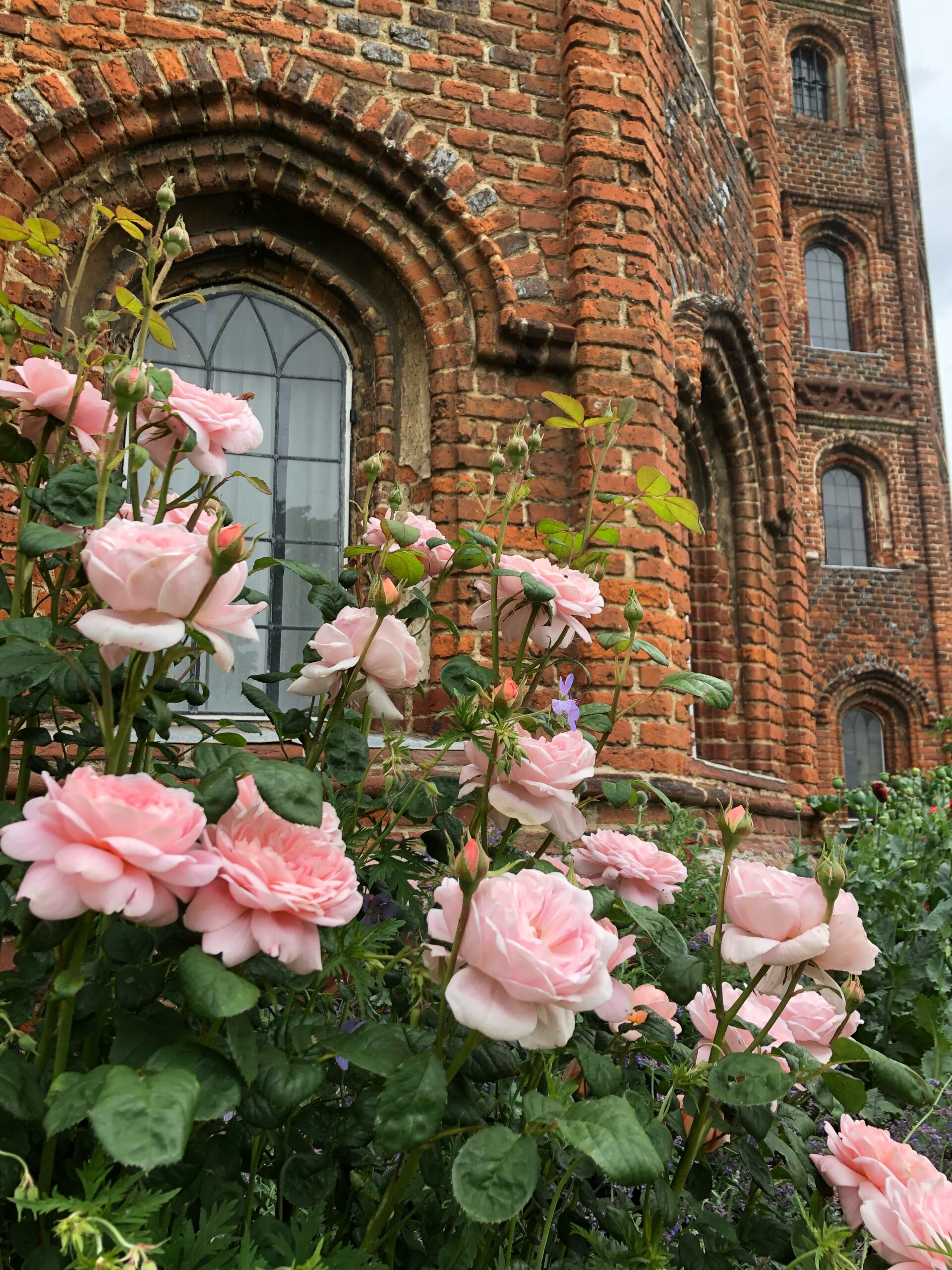 Roses outside the Tudor tower