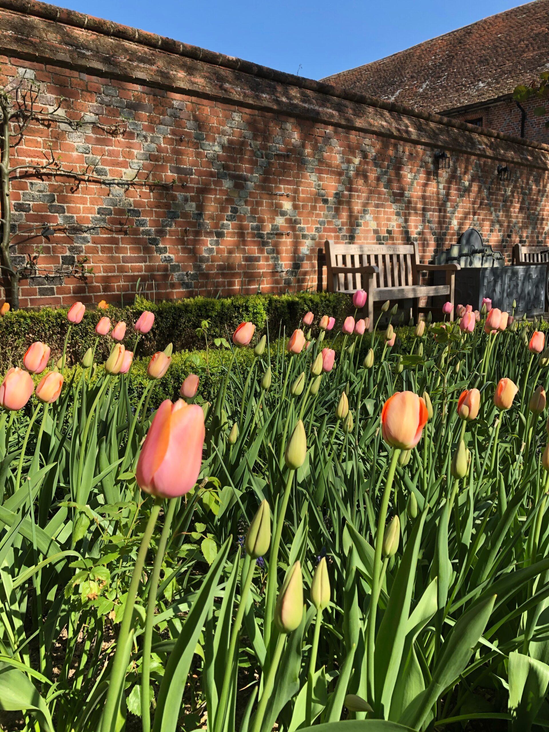 Tulips, garden wedding venue